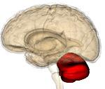 Мозжечковая дизартрия