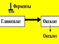 Оксалоз (Первичная гипероскалурия)